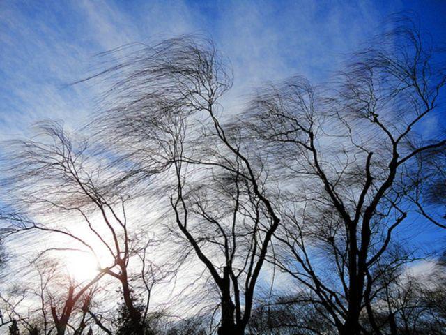 7 декабря в Костромской области ожидается ветер с порывами до 23 м/с