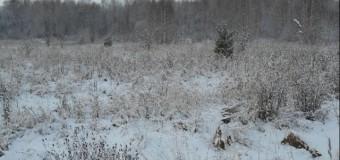 На собственника земельного участка в Судиславском районе заведено дело