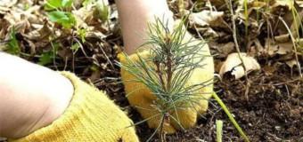 В Судиславле прошел Всероссийский День посадки леса