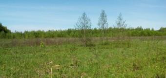 Хозяйка земельного участка в Судиславском районе заплатит 15 тыс. рублей штрафу