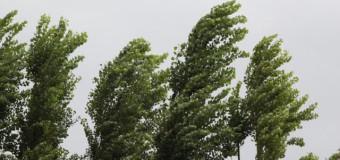 В Судиславском районе прошла гроза с градом и сильным ветром