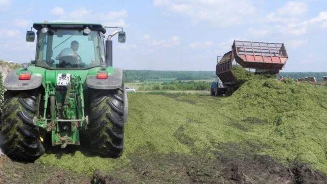 Судиславский район в лидерах по заготовке кормов