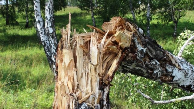 Сильный ветер в Судиславле повалил несколько деревьев